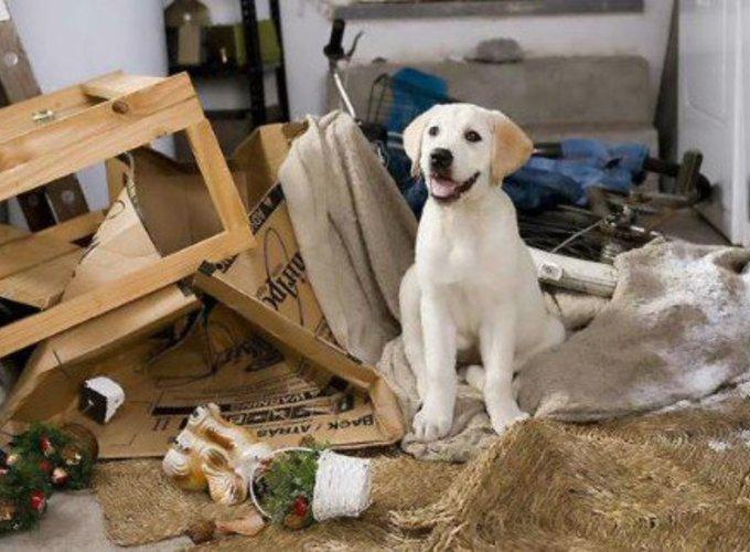 Могут ли домашние животные мстить?
