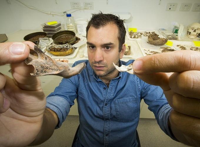Ученые обнаружили древних крыс размером с собаку