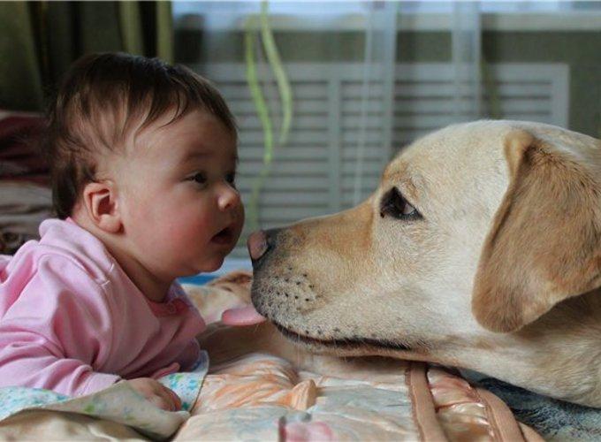 Иногда бабушка для ребёнка опаснее собак и кошек