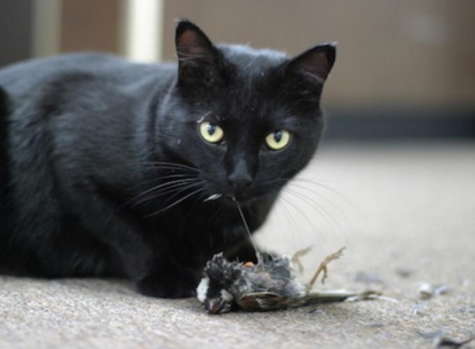 Почему кошки привередливы в еде?