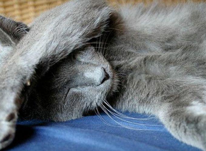 Кошки - эгоисты. Или это клевета?