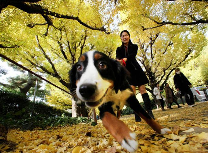 В Токио запустили сервис по прокату собак