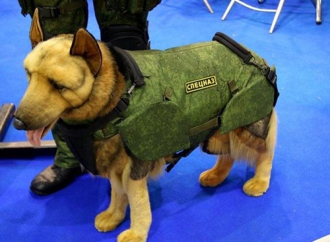 В России наладили выпуск собачьих бронежилетов