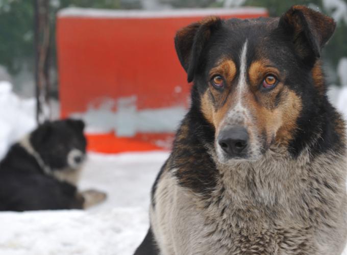 Пять способов помочь бездомным животным