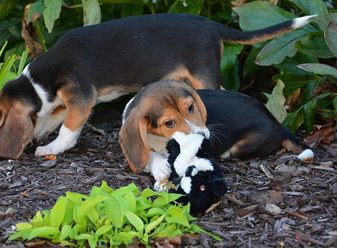 Родились первые в мире ЭКО-щенки