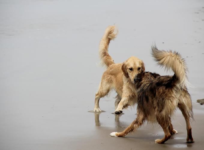 Доказано наличие самосознания у собак