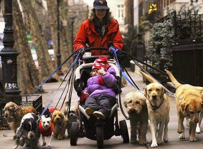 Сколько собак живет во всём мире
