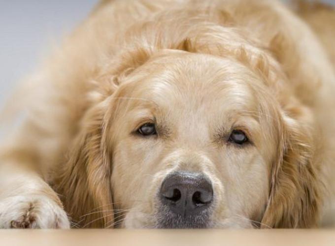 Эмоции собак похожи на человеческие