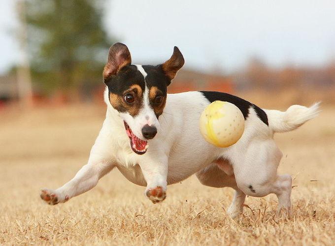 20 интересных игр с собакой на прогулке и дома