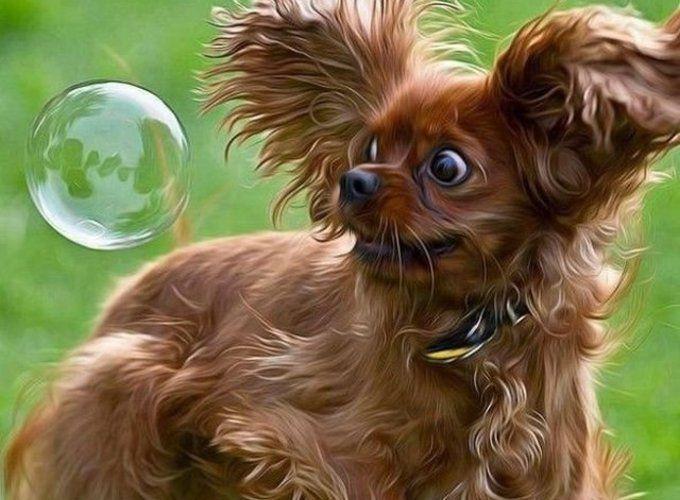 Почему так важно играть с собаками?