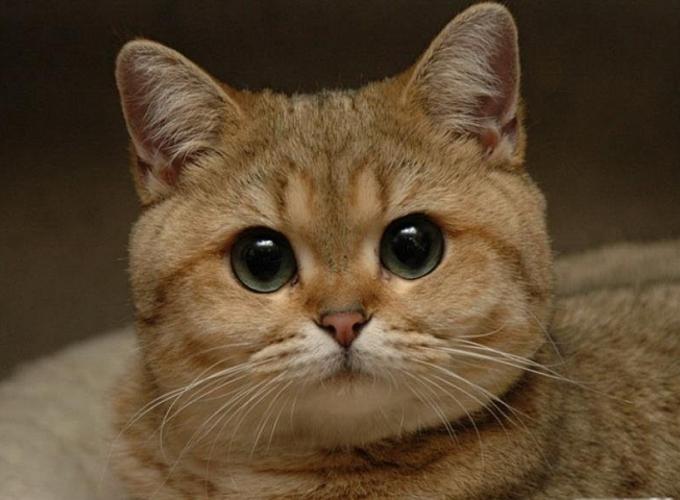 Ученые: кошки не любят людей