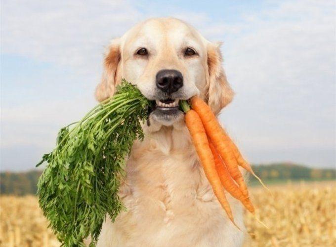 Кошки и собаки – вегетарианцы! Возможно ли?