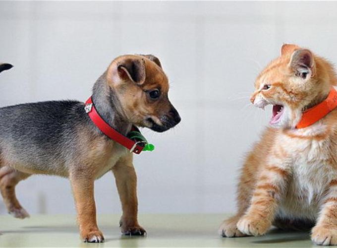 Кошки и собаки под одной крышей