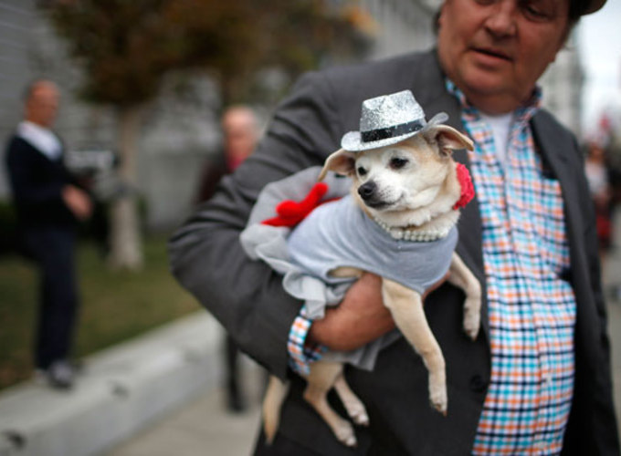 Почему начальники любят собак, а разведенные - кошек