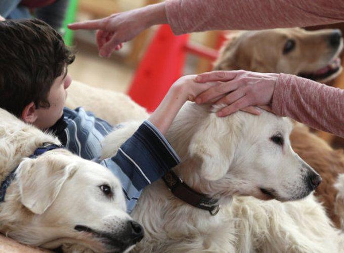 Зоотерапия и собака