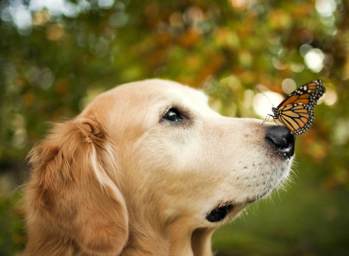 Кошки и собаки защищают от рака