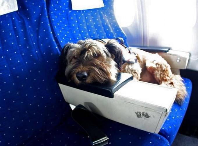 Животные на борту авиалайнера
