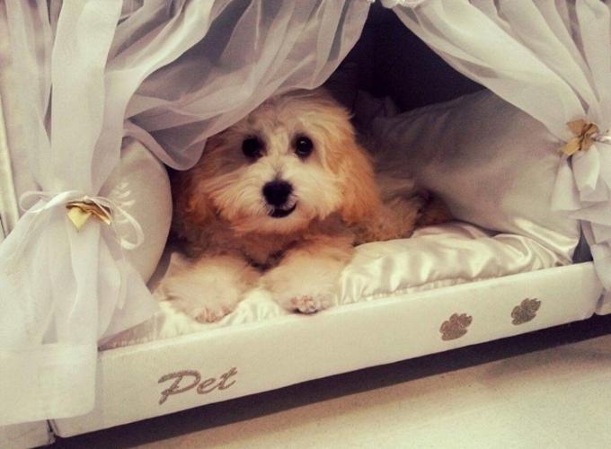 Сказочная кровать для владельцев собак