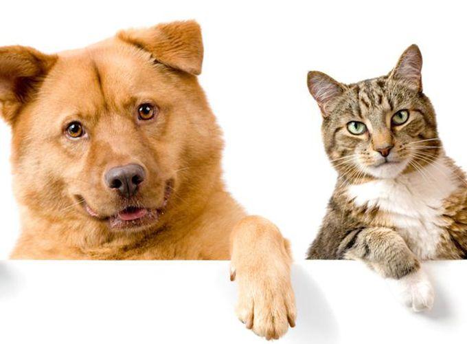 Чем можно заразиться от собак и кошек