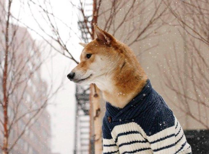 Сколько зарабатывают собаки и кошки из интернета