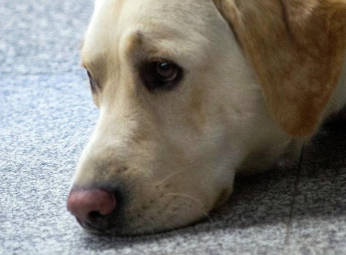 Собаки умеют распознавать эмоции на лицах и в голосах