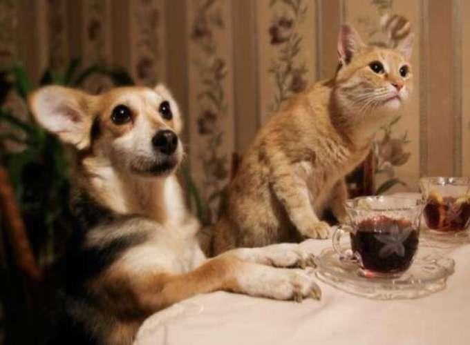 Ученые выяснили, как пьют кошки и собаки