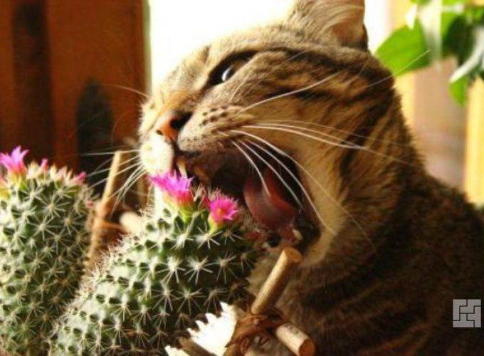 Комнатные растения и домашние питомцы