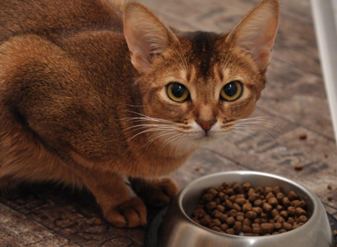 Особенности кормления кошек и собак