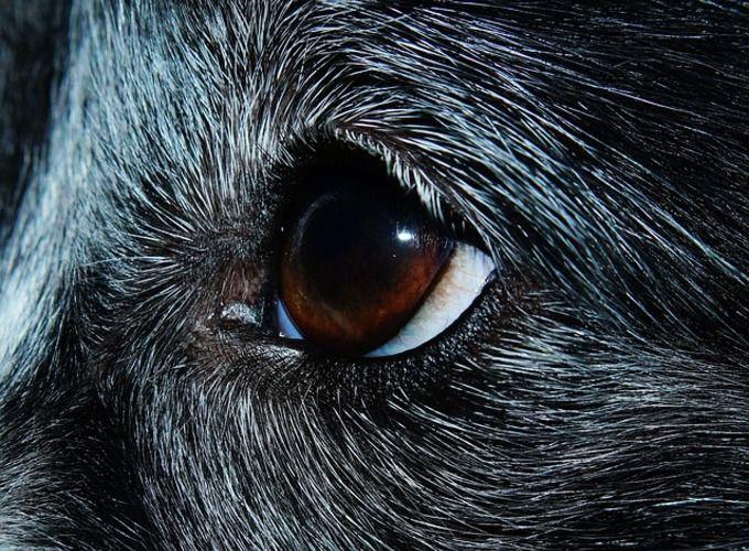 Протозоозы у кошек и собак