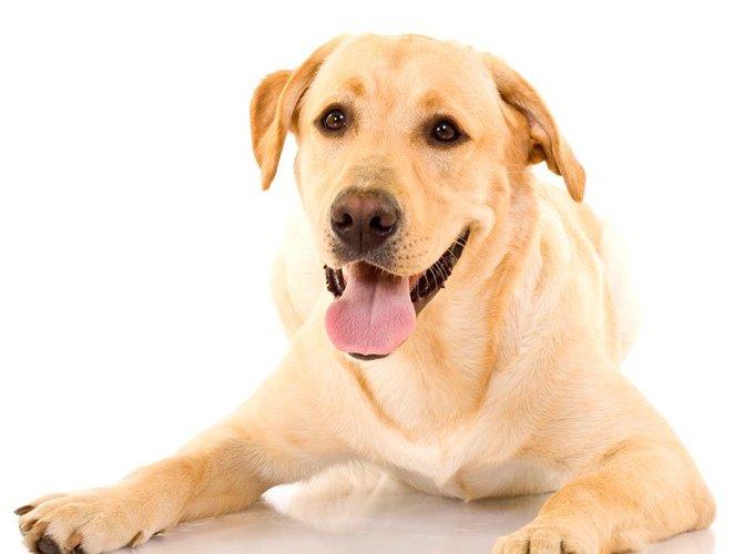 Собаки способны определять отношения между людьми
