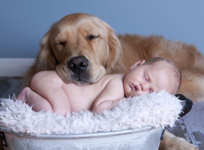 Грудные дети и домашние животные