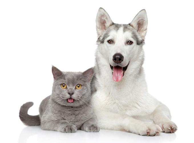 Кто лучше: кошки или собаки? Ученые дали ответ