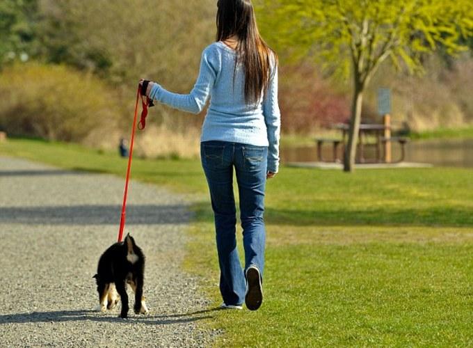 Выгуливание собаки эффективнее многих диет
