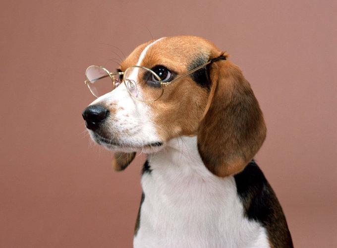 Собаки пользуются долговременной памятью