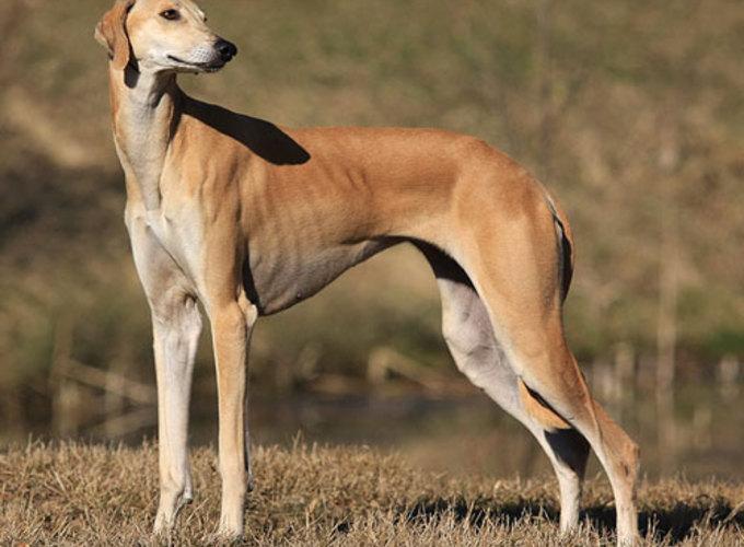 В США признали две новые породы собак