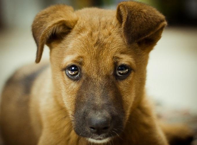 Чувствуют ли собаки вину?