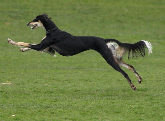Как гены породистых собак помогают людям