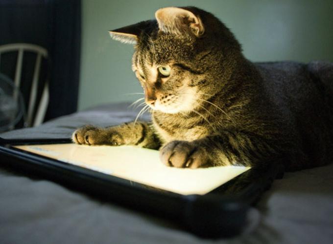 Кошки при фотосъемке испытывают сильный стресс