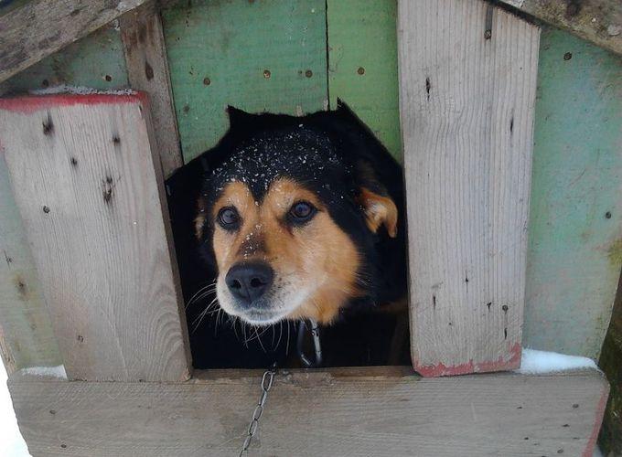 Как построить собачью будку и вольер