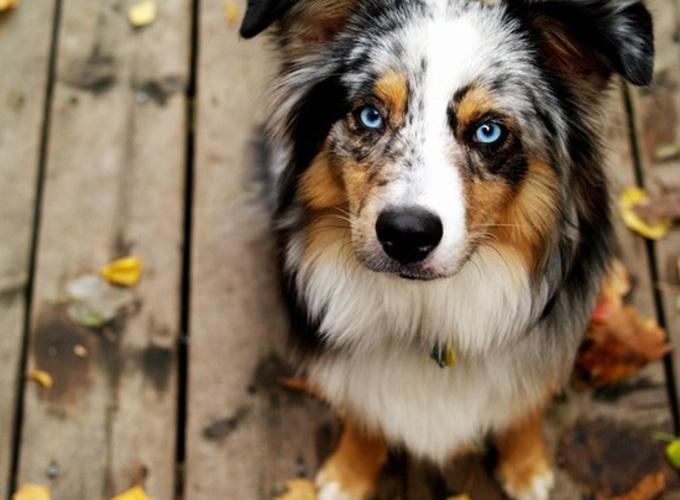 Как собаки связывают слова и предметы