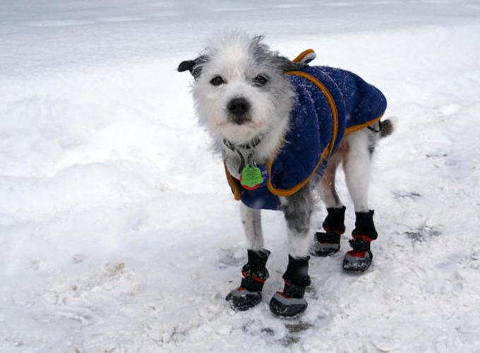 Власти Москвы посоветовали беречь животных от уличных реагентов