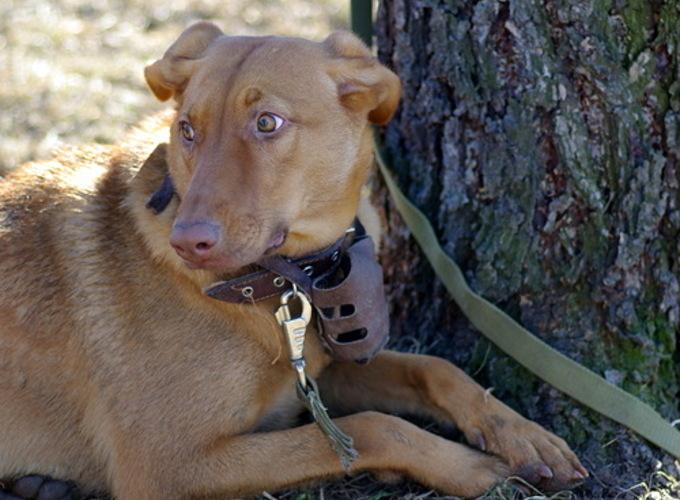 Почему собаки вызывают больше сочувствия, чем люди