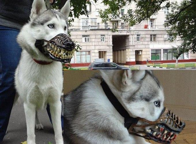 Собачьи моды и выставки