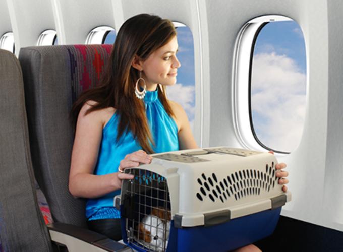 Что нужно знать о перевозке кошек в самолете и поезде