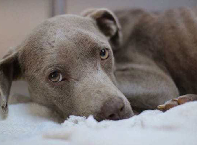 Ветеринар спас пса личным примером