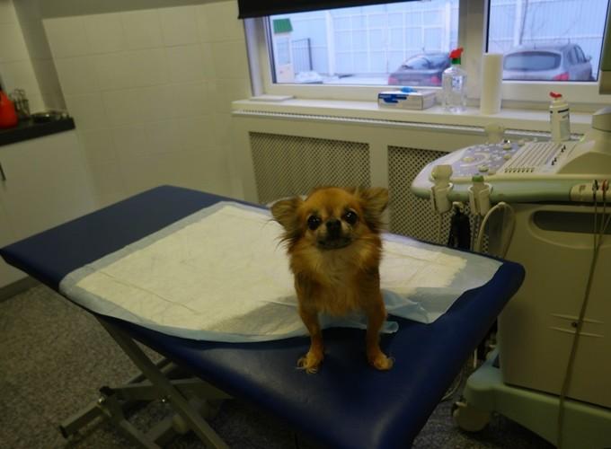 Как избежать агрессии собаки в ветеринарной клинике?