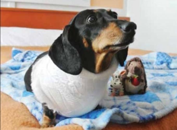 Клинический случай пароксизмальной атриобентрикулярной блокады 3-й степени у собаки