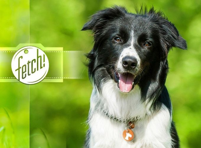 Приложение Microsoft определяет собак по фото