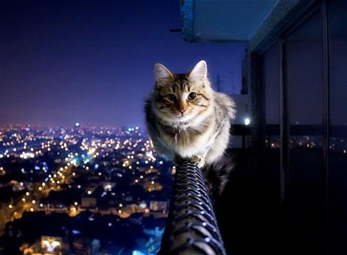 Неврология кошек