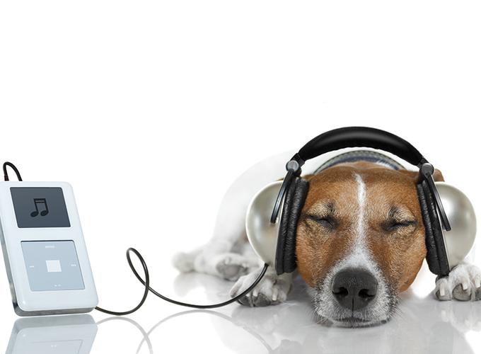 Какую музыку любят животные?